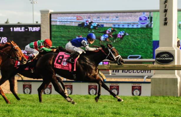 Woodbine Horse Racing Betting Odds